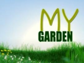 My Garden 27-09-2020